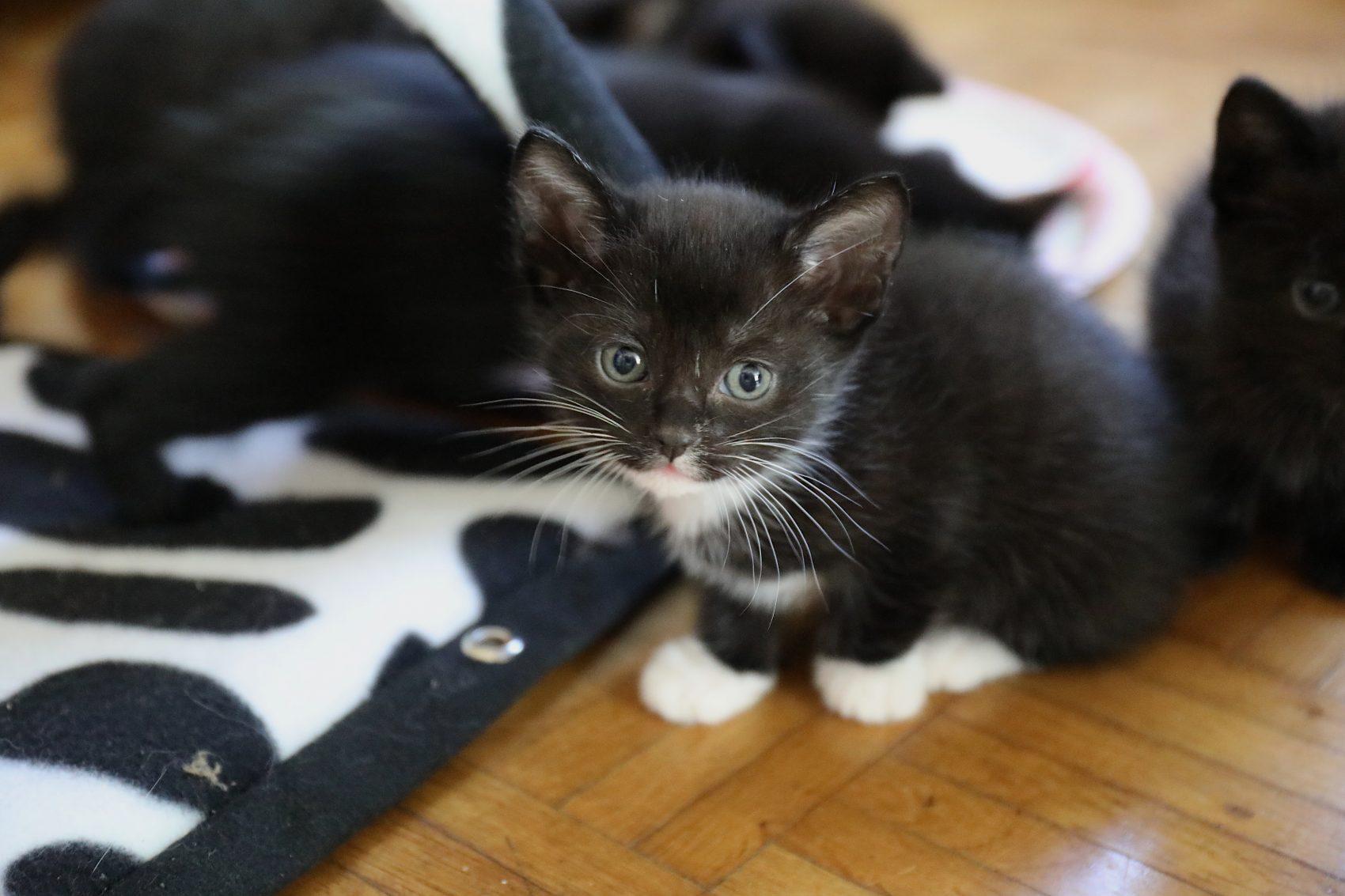 dieren huisdieren video videografie fotografie - RSDesigns