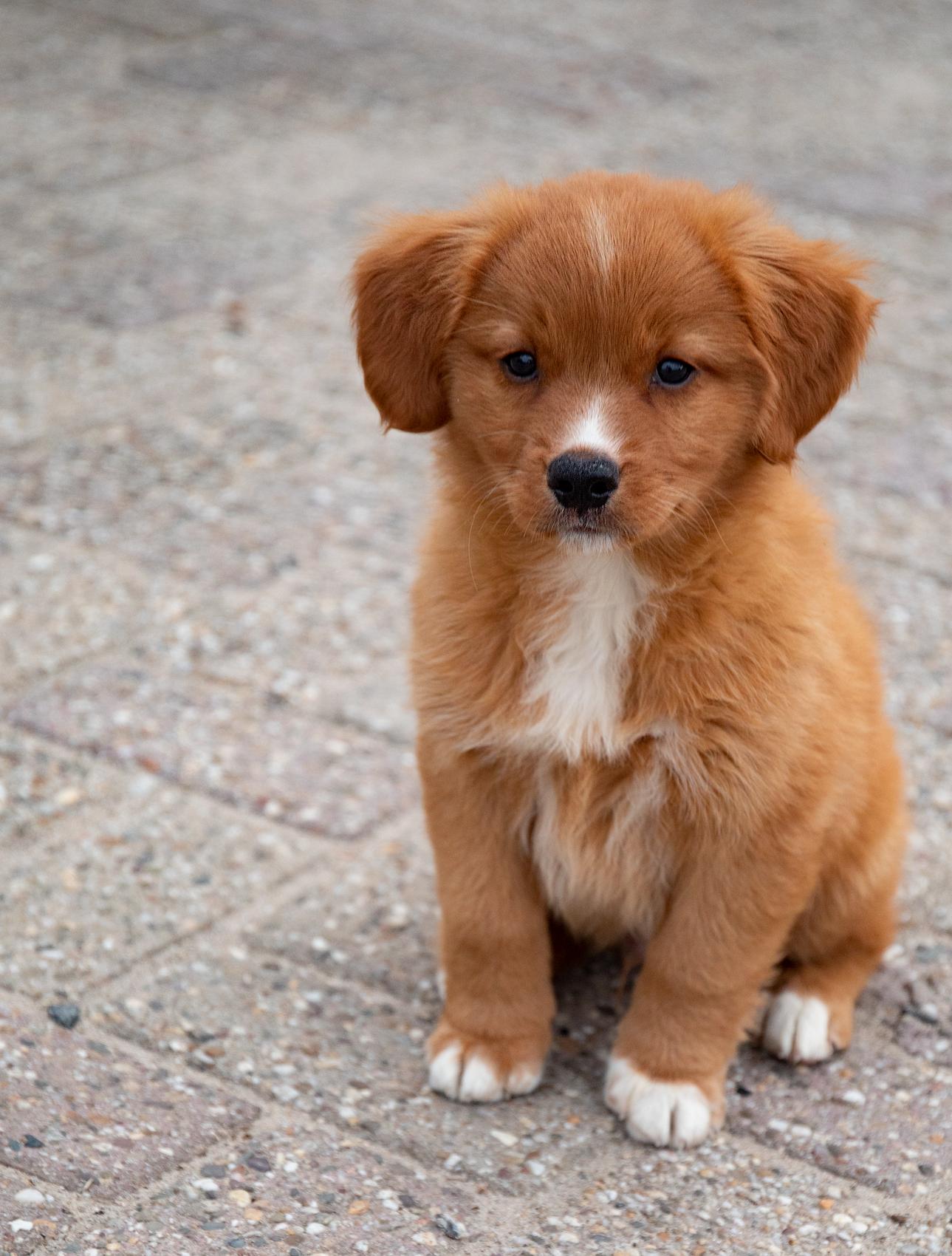 huisdieren dier hond buiten fashion lifestyle linkedin design beauty content creatie video videografie foto fotografie 4K bedrijven bedrijfsvideo bedrijfsfoto promotie- RSDesigns